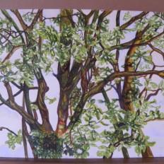 eikenboom1